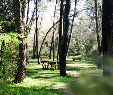 Foresta Mercadante in Puglia