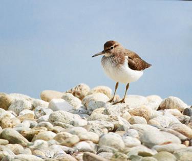 Fratino Bari Puglia Birdwatching birdwatcher