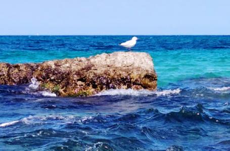 Bari coast: 42 km of coastline with a very clean sea!