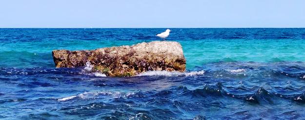 Litorale barese: 42 km di costa con un mare pulitissimo!